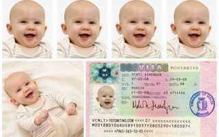 фото на шенгенскую визу: требования, сколько штук нужно, видео – как сделать самому 2020