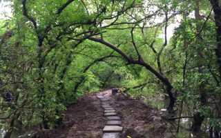 4 места на Гоа, которые важно посетить