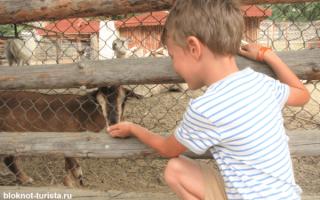 Отдых в Болгарии с детьми, куда поехать? Лучшие курорты