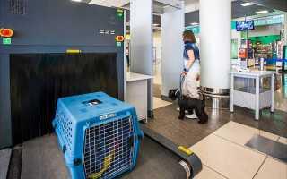 Как купить билет на самолет для собаки и сколько он стоит?