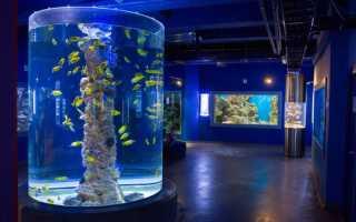 Что в Санкт-Петербурге посетить в первую очередь: музеи и парки, места и события