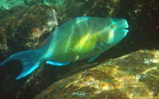 Архивы подводный мир